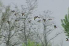 Fischioni grup volo (1)