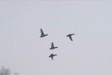 Morette volo grup (1)