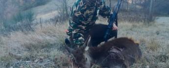 il mio primo cervo