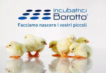 incubatrici-borotto-quackers-italia